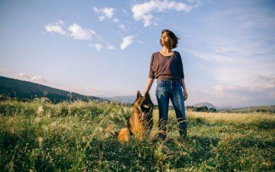 Curso adiestrador canino online
