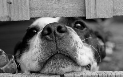 Cómo ayudar a tu perro durante la cuarentena