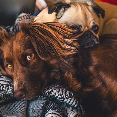 curso-avanzado-de-comunicacion-canina-en-madrid