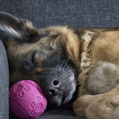 curso-avanzado-de-modificacion-de-conducta-canina-en-madrid
