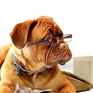 Curso Educador Canino Profesional en Madrid