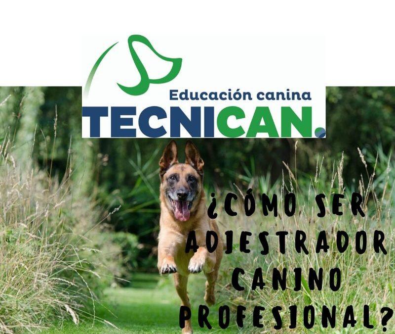 ¿Cómo ser adiestrador canino profesional?