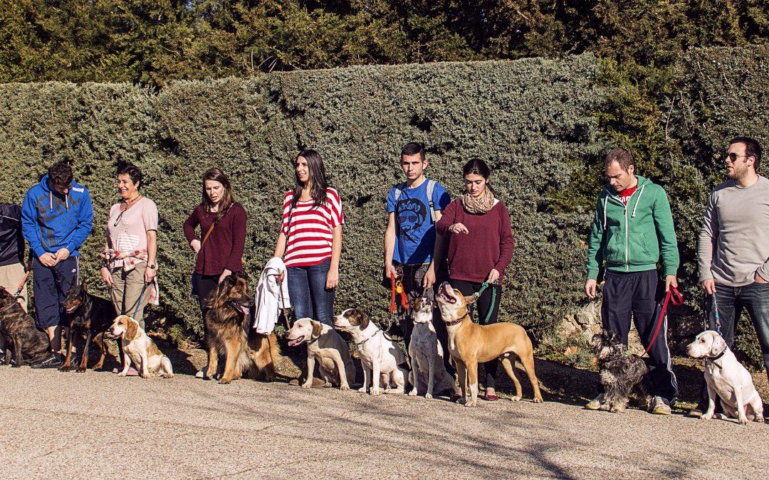 Curso de adiestrador canino en Madrid