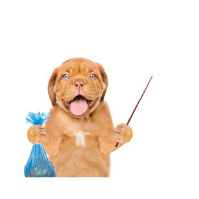 Curso esencia educación canina