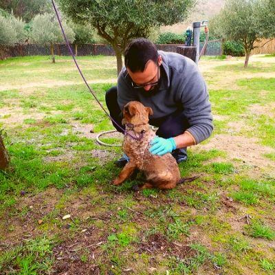RESIDENCIA CANINA MADRID