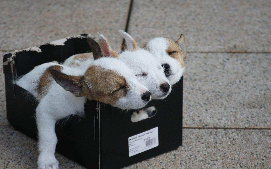 Curso esencial educación canina
