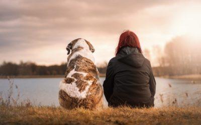 Los 3 problemas más comunes con los perros