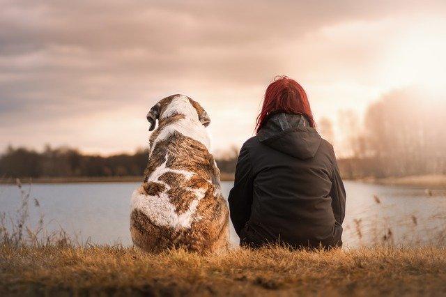 problemas habituales con los perros