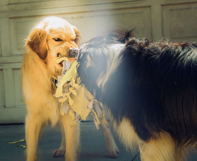 Adiestramiento canino en Madrid