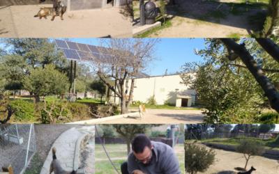 Residencia para perros en Madrid