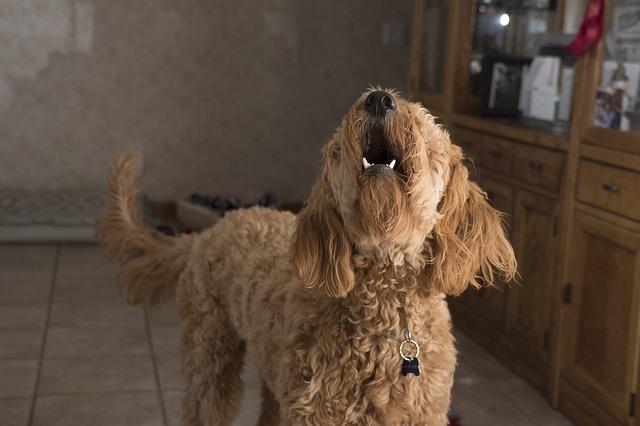 Mi perro no para de ladrar