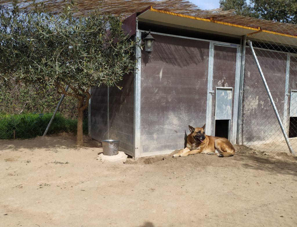 Perro en parcela residencia canina