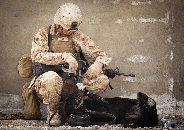 Salidas profesionales para un adiestrador canino