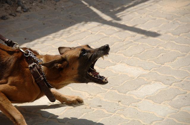 mi perro es agresivo