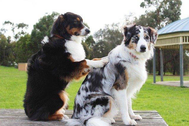 ¿Educación o adiestramiento canino?